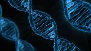 社会不安障害 セロトニン 遺伝