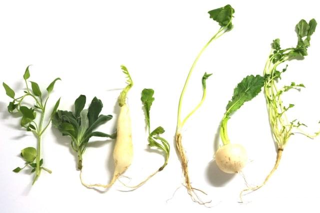 七草の種類 効果